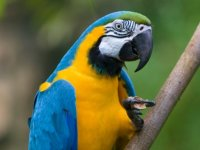 Gözaltına alındı... Papağan uyuşturucu satıcılarıyla iş birliği yaptı!