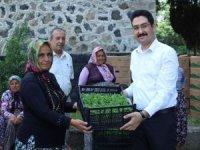 Kadın çiftçilere biber fidesi dağıtıldı