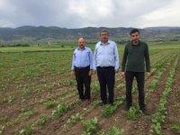 Amasya Şeker'den üreticiye 13,6 milyon liralık avans