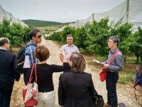 Güney Korelilerin ağzı Salihli kirazıyla tatlanacak