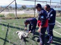 Kale ağlarına takılan köpeği itfaiye kurtardı