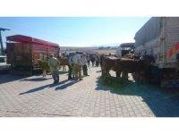 Aslanapa'ya Canlı Hayvan Pazarı
