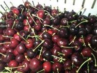 Taze kiraz, üzüm ve nar ihracatçıları yeni ihracat rekorları için kümeleniyor