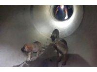 Adana'da rögardan düşen köpek yavruları kurtarıldı