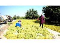 Bakanın kuru üzüm fiyat açıklaması üreticileri memnun etti