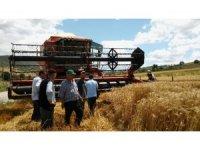 Buğday hasadında dane kaybı düştü, 4 milyon 415 bin TL kazanç sağlandı