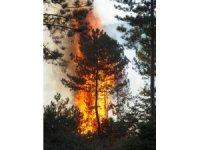 GÜNCELLEME - Uşak'ta orman yangını