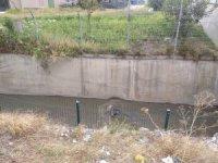 Başkent'te 3 köpek zehirlenip su kanalına atıldı