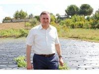 Hatay Büyükşehir Belesiyesinden çiftçilere fide desteği