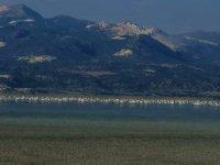 Yarışlı Gölü'nün kuruduğu iddiası