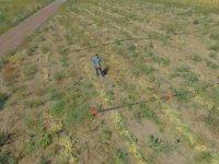 """Kayseri'de ilk defa soğan eken çiftçi Yılmaz: """"4 ila 7 ton arasında verim bekliyoruz"""""""
