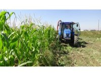 Muş'ta 'silajlık mısır' hasadı