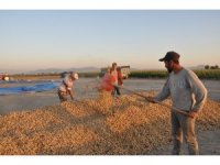 Yer fıstığı üreticisi destek bekliyor