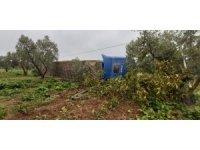 Şişe yüklü tır zeytin bahçesine devrildi