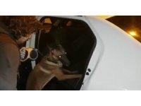 Narkotik köpeği uyuşturucu tacirlerinin korkulu rüyası oldu