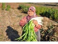 150 yıllık ata tohumlarıyla üretilen pırasa