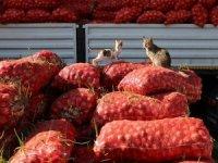 Tonlarca meyve ve sebze kabzımalların elinde kaldı