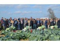 Tarla gününde 'yerli ve milli lahana' çeşitleri tanıtıldı