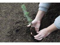 Ormanlar Büyüyor sosyal sorumluluk projesi ile 7 bin 300 çam fidanı dikildi