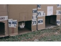 Kayıp kedinin bulunması umuduyla sokaklara karton kulübe yerleştiriyorlar