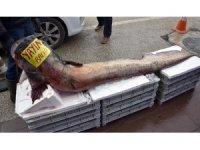 Dev yayın balığı görenleri şaşırttı