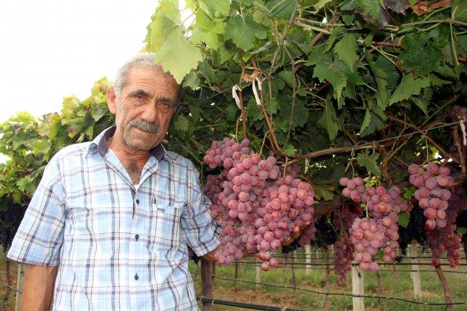 Üzüm ve narenciye üreticisi Rusya pazarıyla sevindi