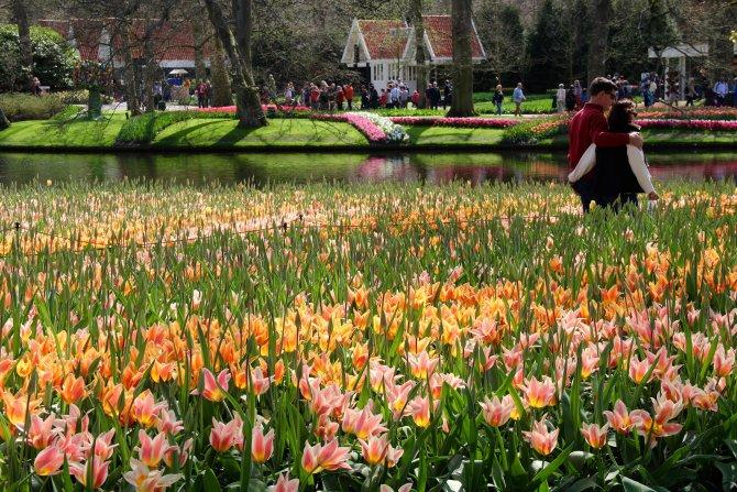 Hollanda'da lale zamanı