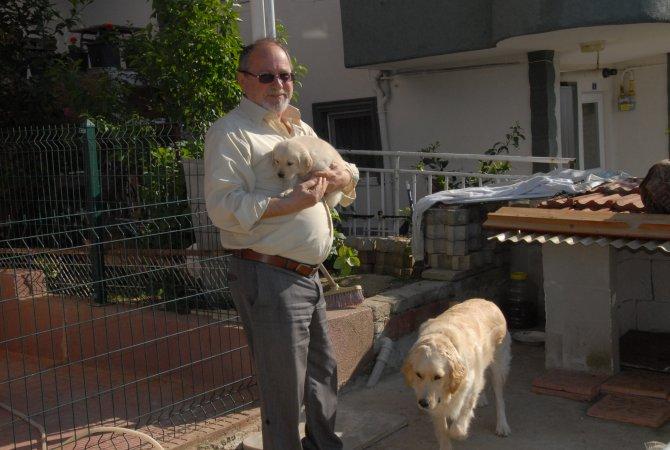 Kocaeli'de yavru köpek hırsızlığı kamerada