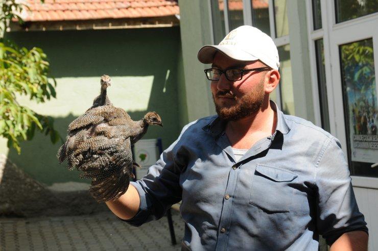 Kırıkkale'de kene ile mücadele