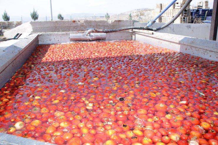Ayaş'ta salça fabrikası faaliyete geçti