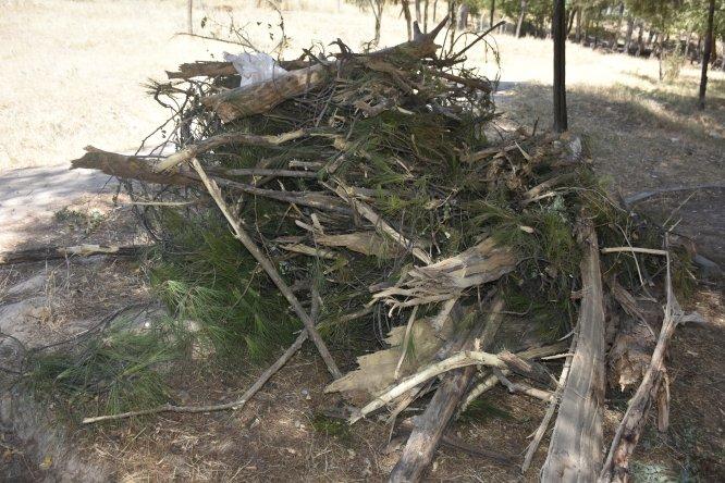 Batman'da HDP'li belediyenin ağaç kesimi