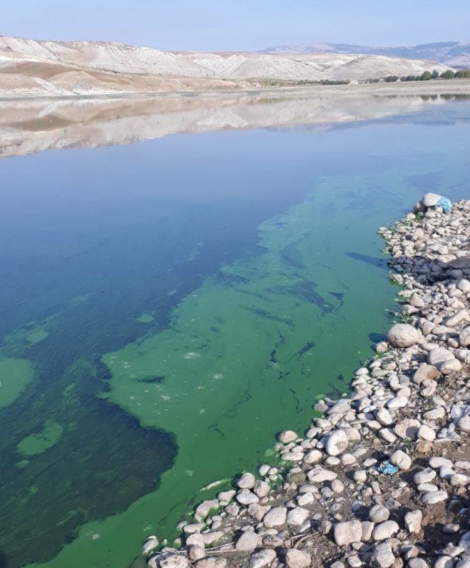 Atatürk Baraj Gölü'nün kıyısındaki renk değişimi sürüyor