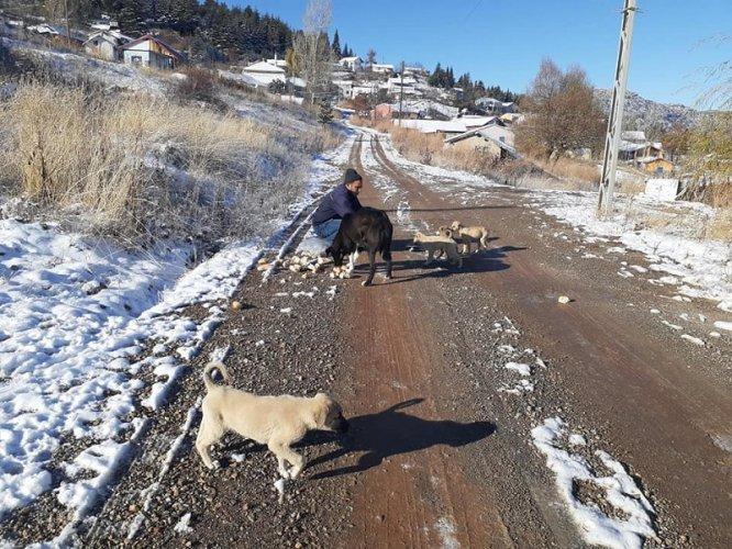 Yalıhüyük Belediyesinden köpeklere yiyecek yardımı
