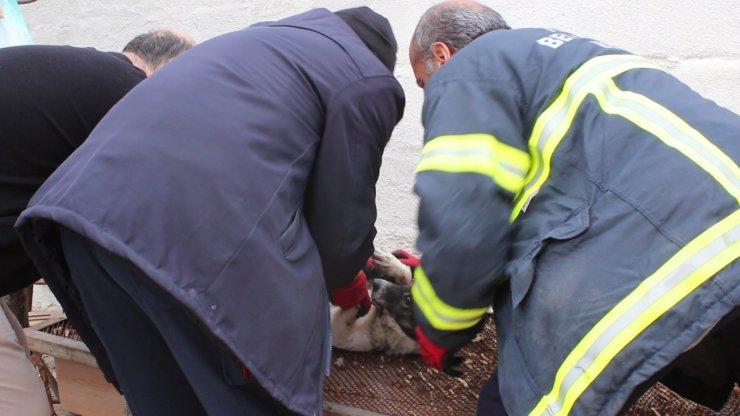 İtfaiye ekipleri kafasına zincir dolanan köpek için seferber oldu