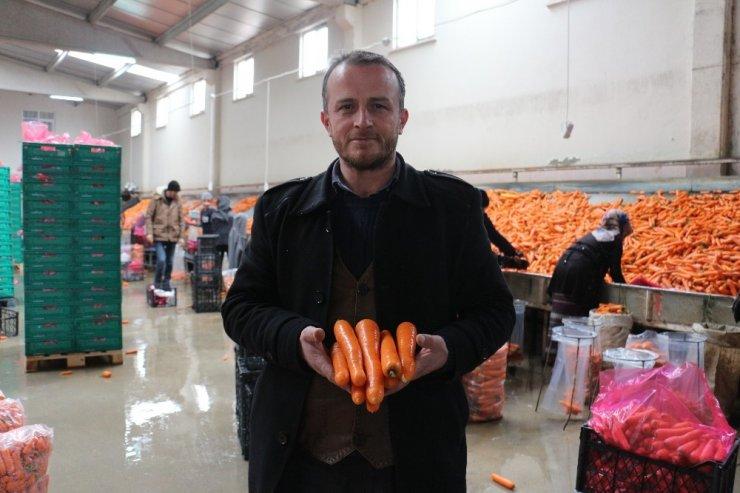 Havucun merkezi Konya'da yaz kış mesai devam ediyor