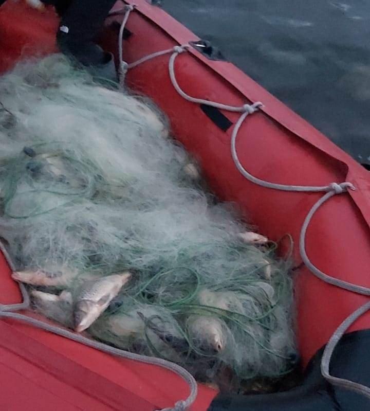 Kaçak avcıların ağına takılan 300 balık kurtarılarak suya salındı