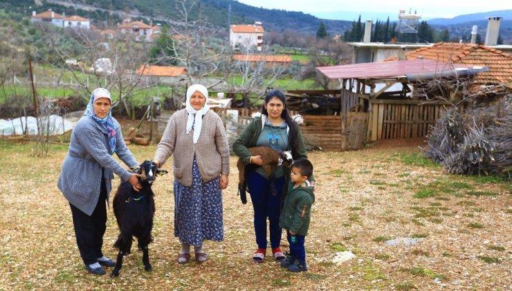 Kadınlara kıl keçisi desteklemesi meyvesini veriyor