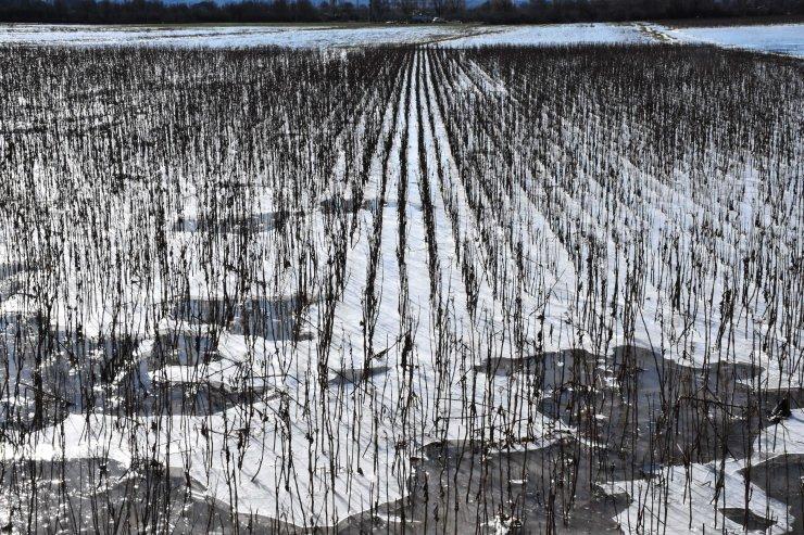 Muğla'da soğuk hava ve don etkili oluyor