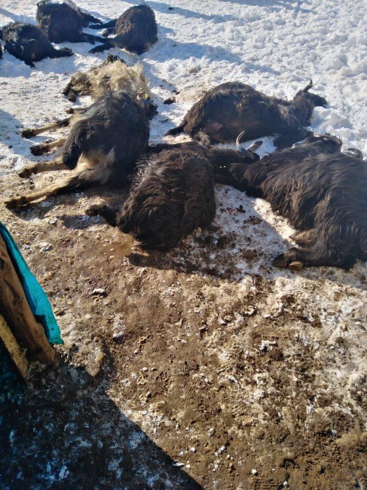 Ahır yangınında 240 küçükbaş hayvan telef oldu