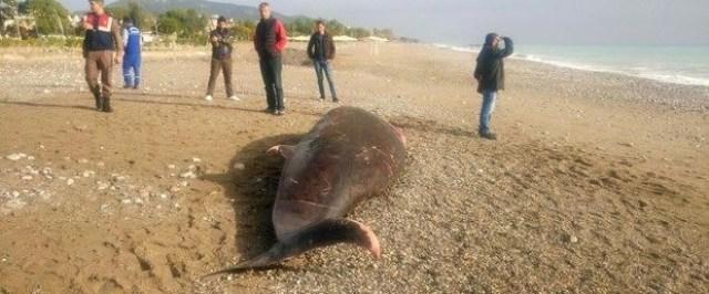 antalya'da-kiyiya-5-metrelik-olu-balina-vurdu-1.jpg