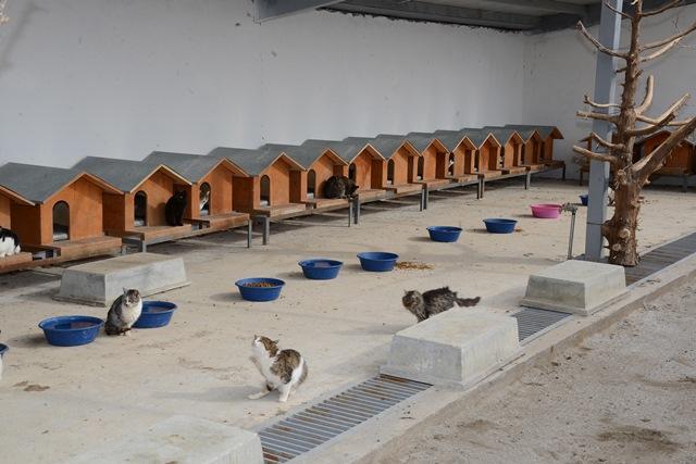 hayvanlar-icin-acil-mudahale-ekibi-(4).jpg