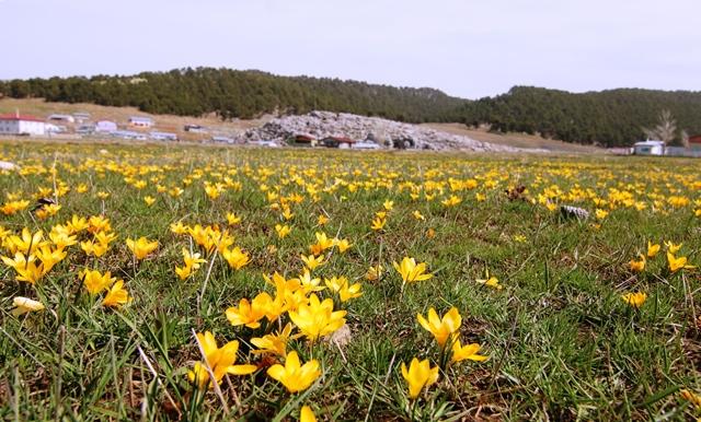 her-mevsim--ayri---bir--guzel-karakisla-yaylasi-(1).jpg