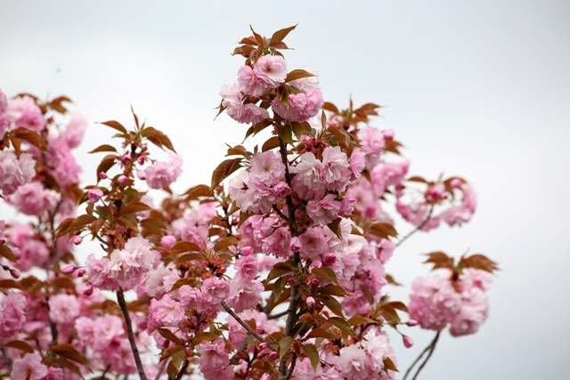 konya'da-sakura-zamani--5.jpg