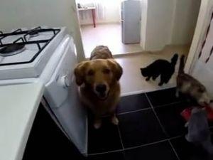 Köpek şakadan ne anlar?