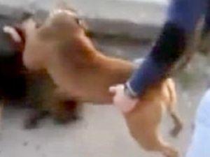 Köpekleri dövüştürdüler, bir de kameraya kaydettiler