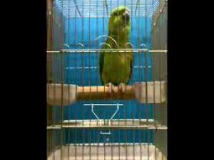 Kur'an okuyan papağan! Nihat Hoca yorumladı