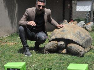97 yaşındaki kaplumbağa Tuki'den derbi tahmini