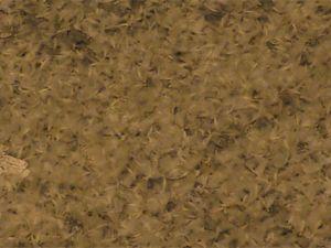 Ardahan'da kelebeklerin ölüm dansı...