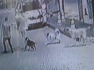 Köpek, gençlere böyle saldırdı
