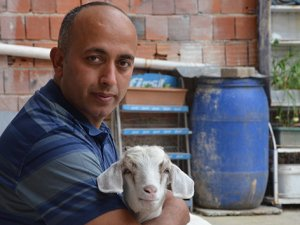 Evladı gibi sevdiği keçiyi yanından ayırmıyor